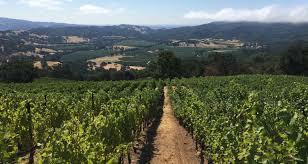 Erba Mountainside Vineyards Image