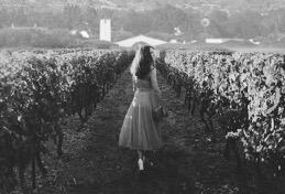Robert Mondavi Winery Image