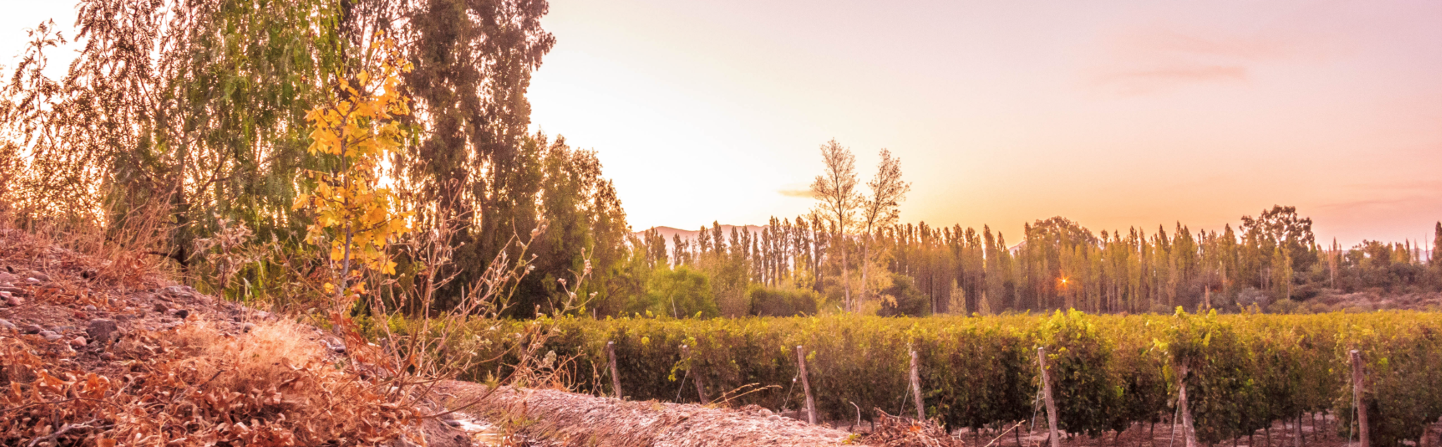 Marale Wines Cover Image