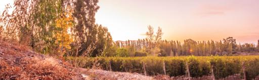 Marale Wines Image