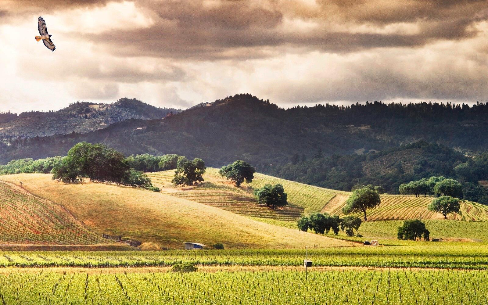 Honig Vineyard & Winery Cover Image