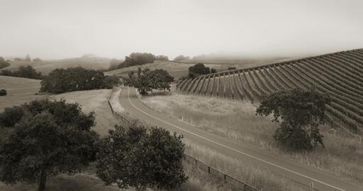Torcia Wines Image