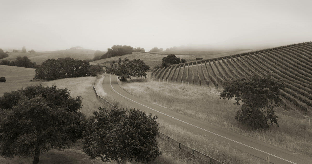 Torcia Wines Cover Image
