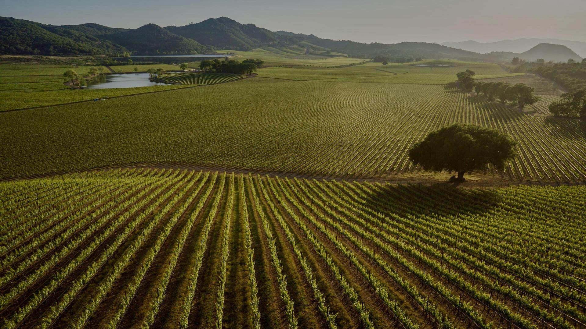 Antica Napa Valley - Antinori Family Wine Estate Cover Image