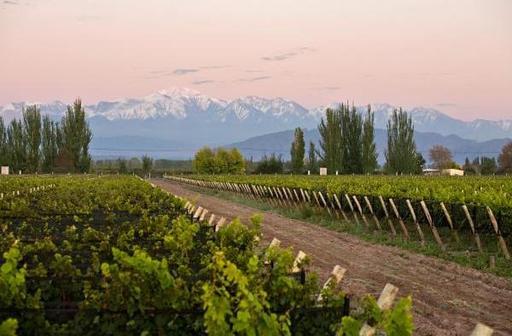 Urraca Wines Image