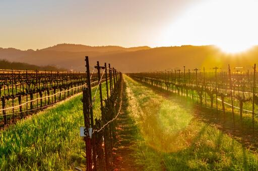 The Setting Wines Image