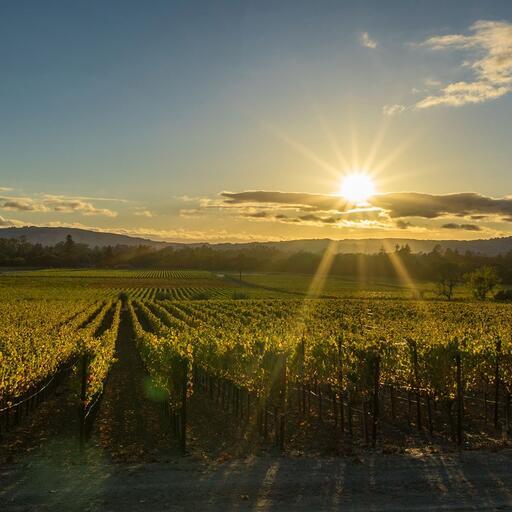 Strala Vineyards Image