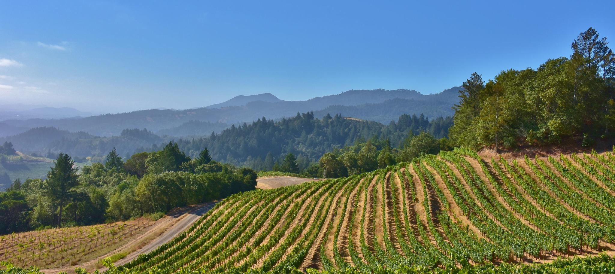 Spring Mountain Vineyard Cover Image