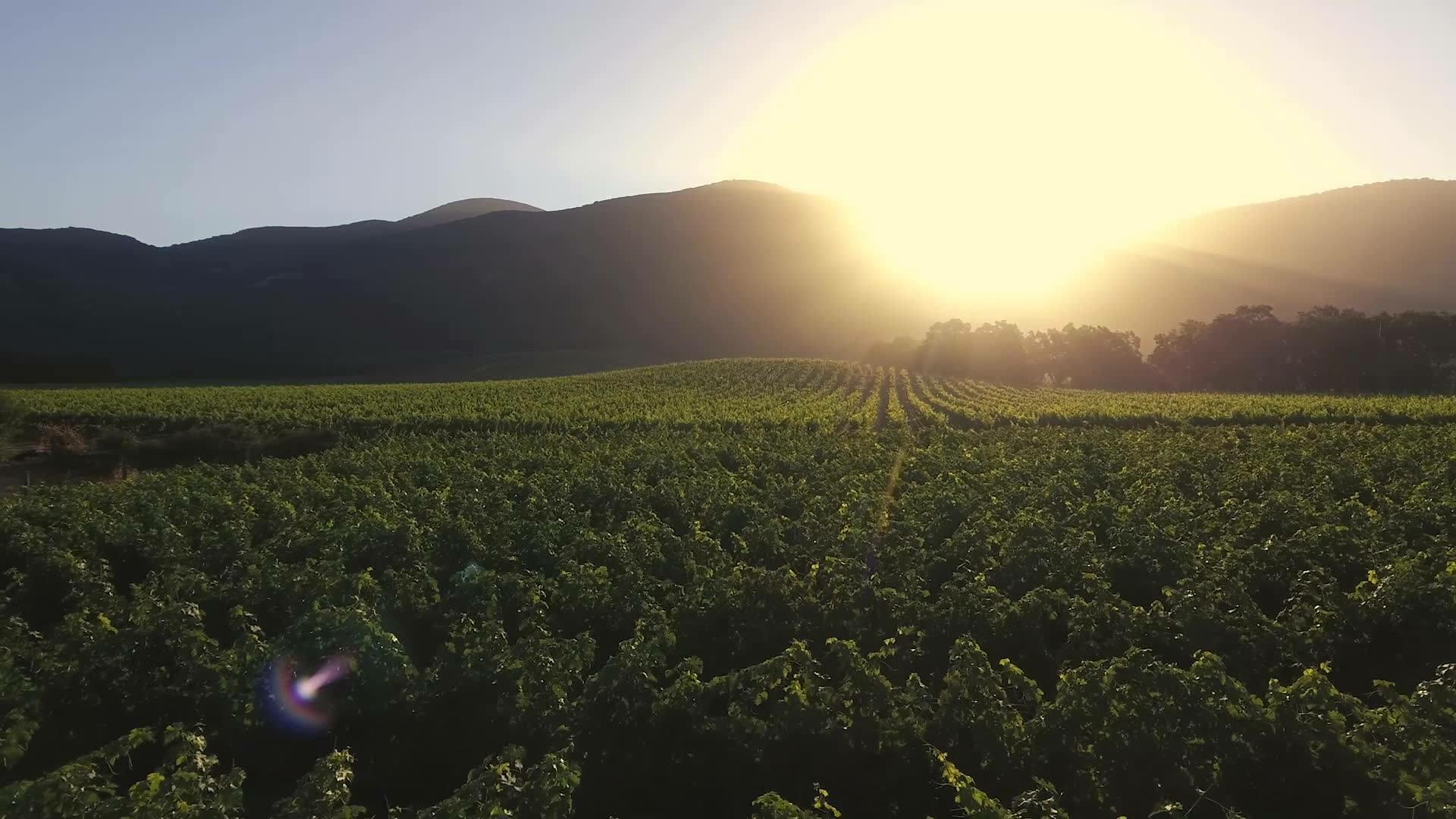Mi Sueño Winery Cover Image