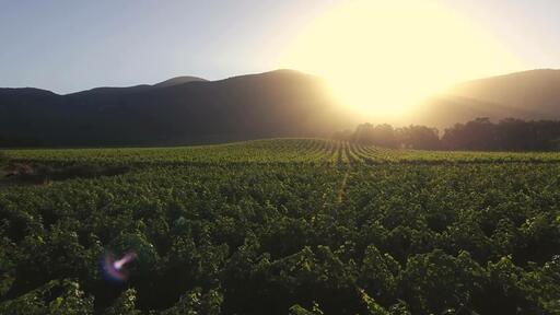 Mi Sueño Winery Image