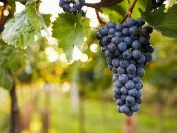 Taken Wine Company Image
