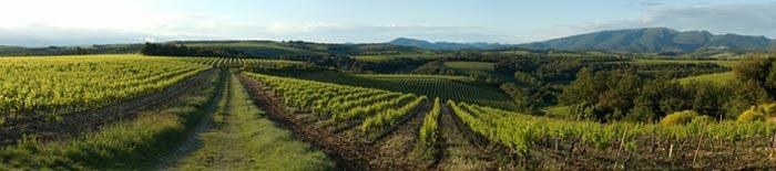Essere Napa Wines Cover Image