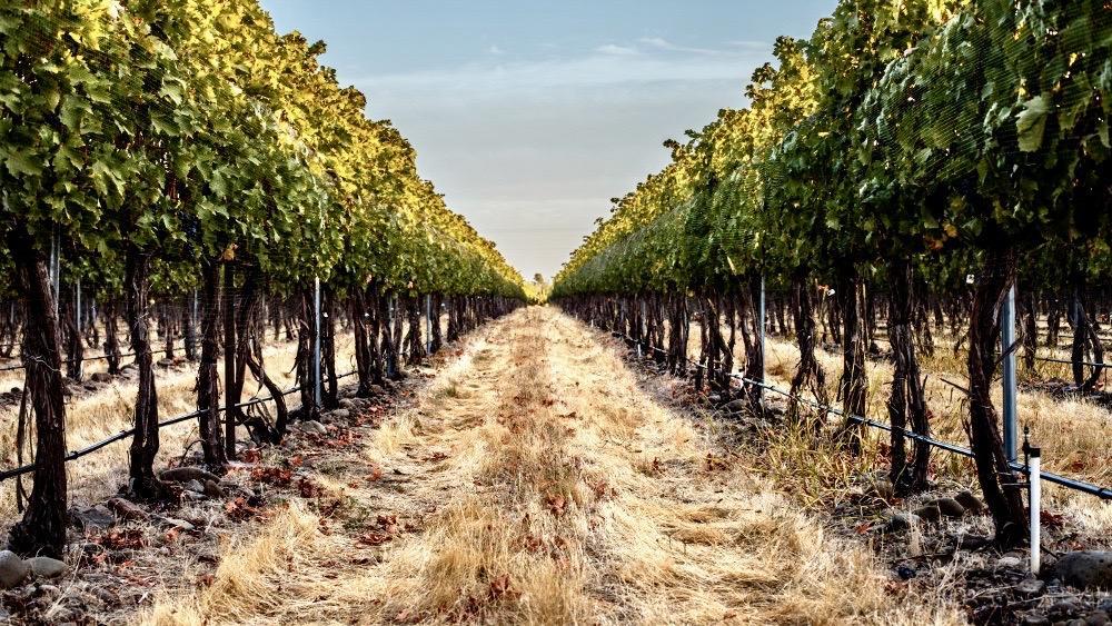 Balboa Winery Cover Image