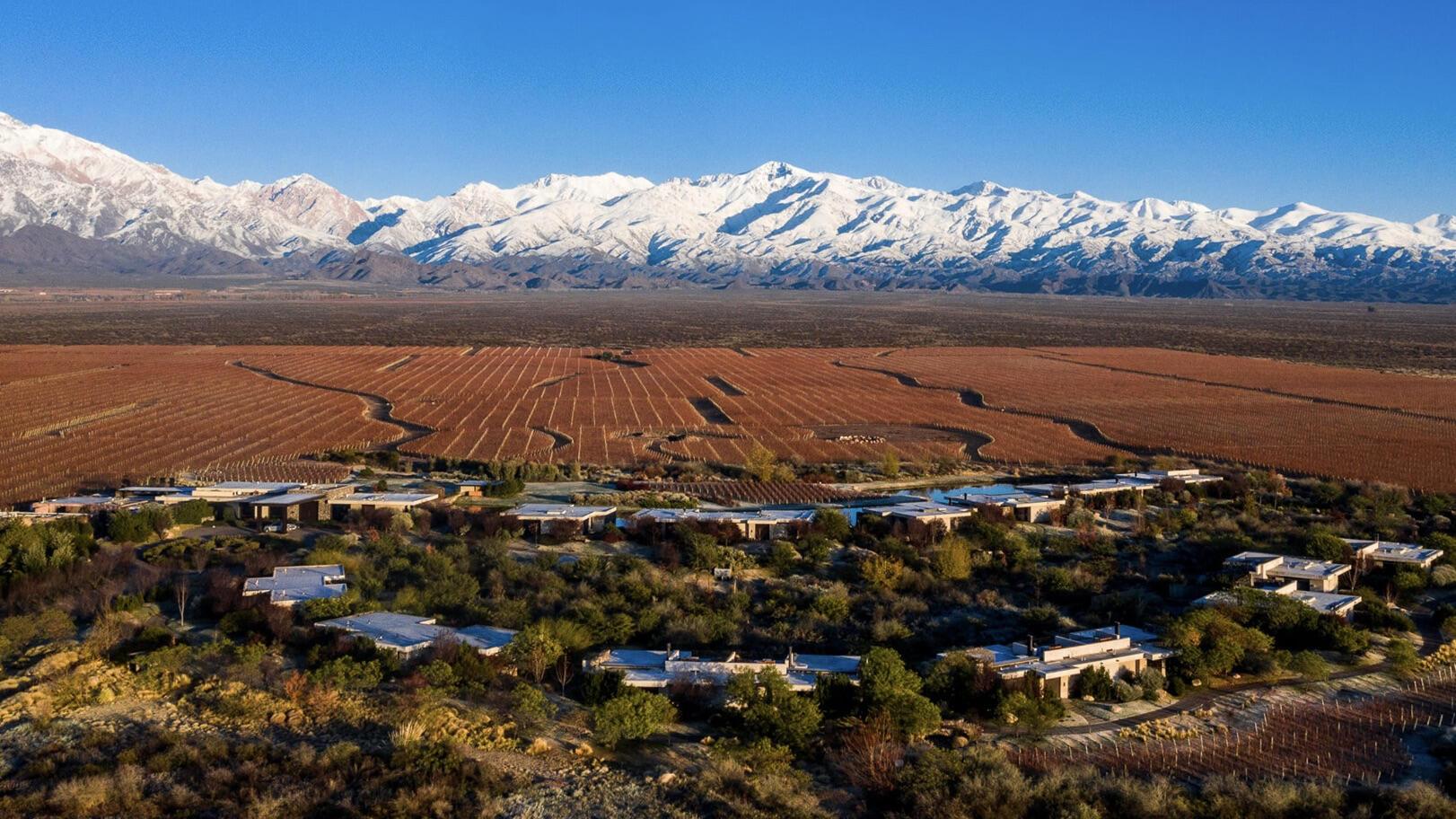 Vines of Mendoza Cover Image