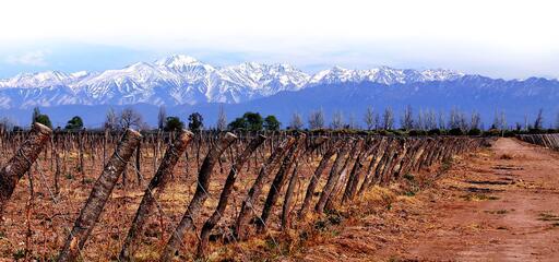 Proemio Wines Image