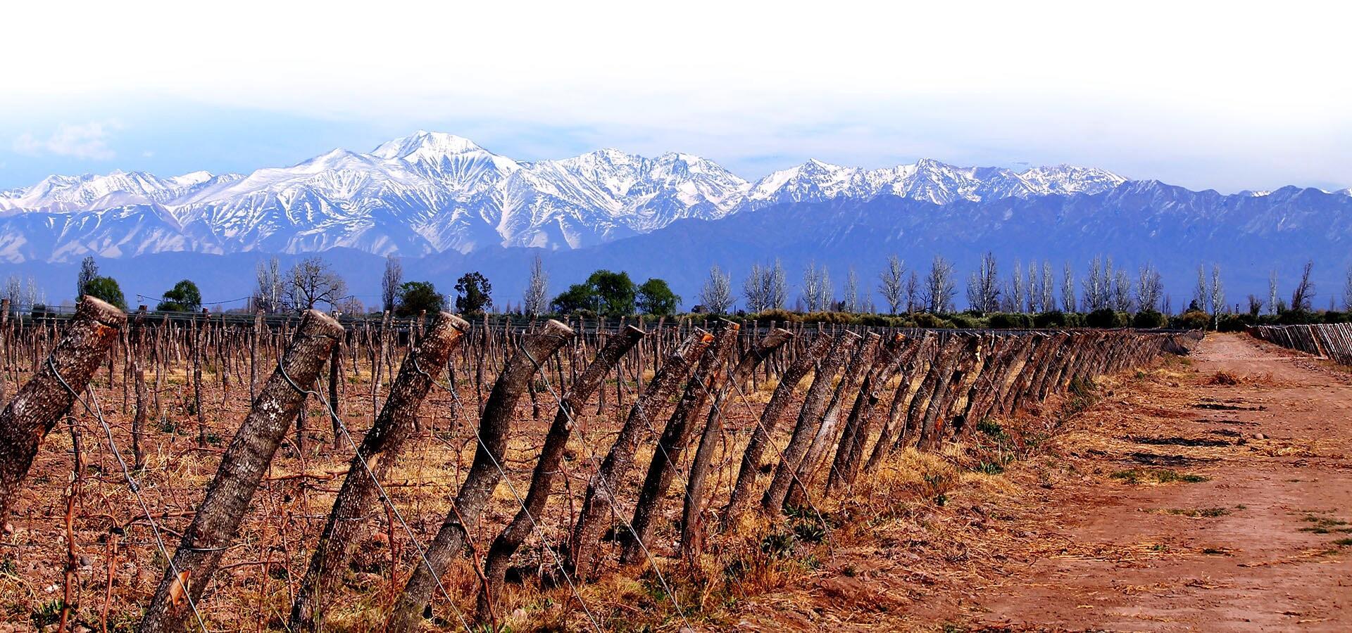 Proemio Wines Cover Image