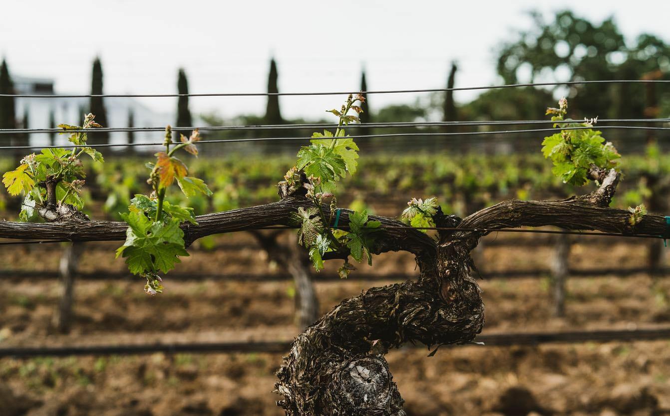 Ellman Family Vineyards Cover Image