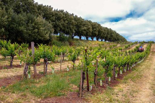 Dunn Vineyards Image