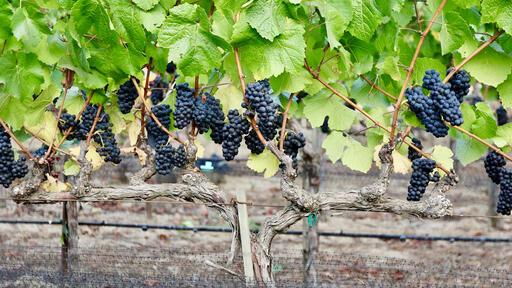 Gaderian Wines Image
