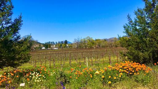 Ballentine Vineyards Image