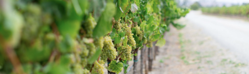 Ceja Vineyards Image