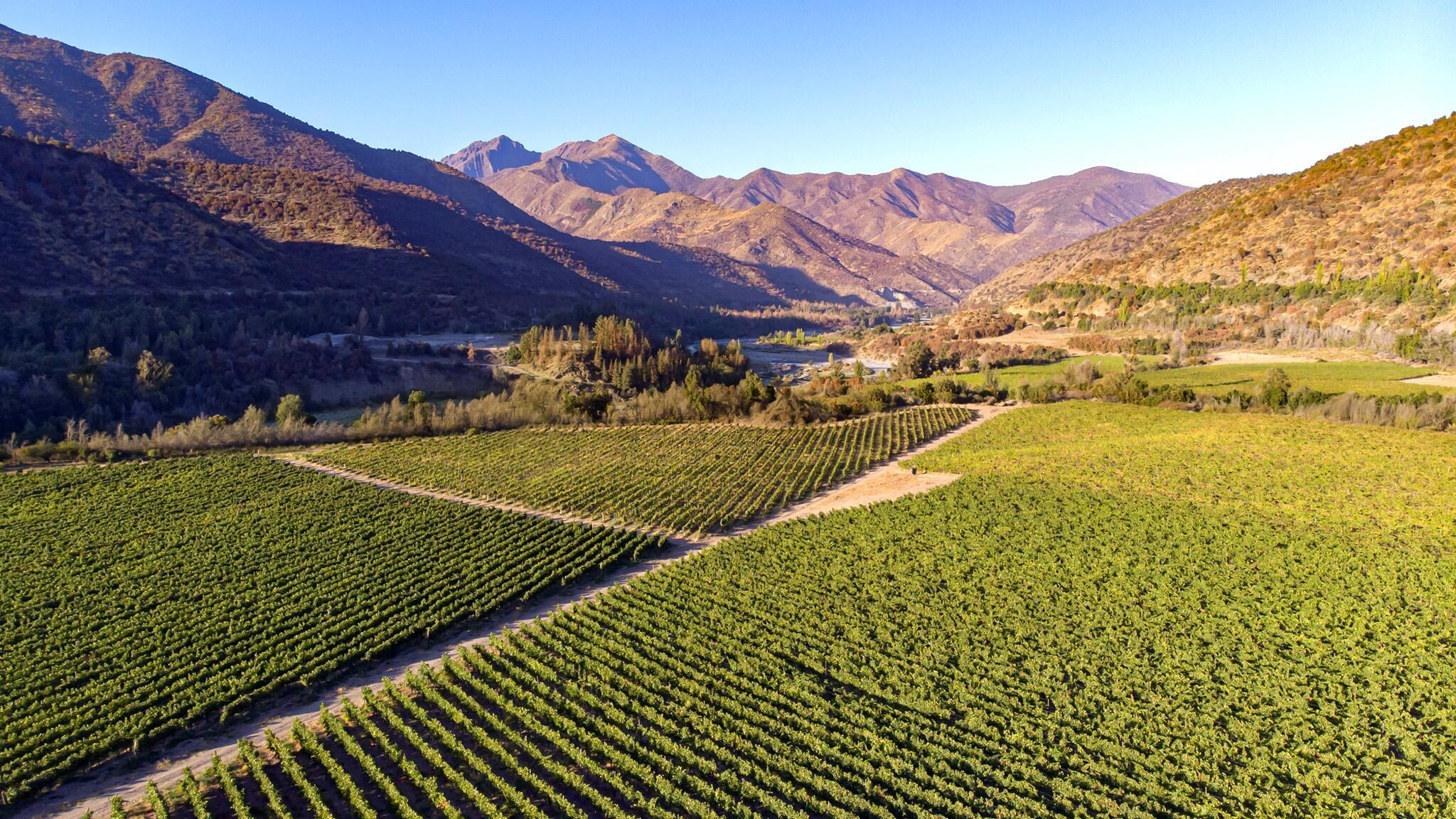 Calyptra Vineyards & Winery Cover Image