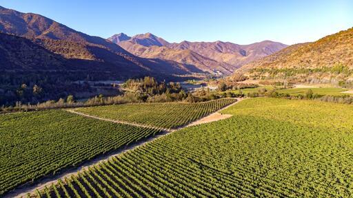 Calyptra Vineyards & Winery Image