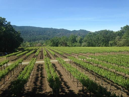 Canard Vineyard Image
