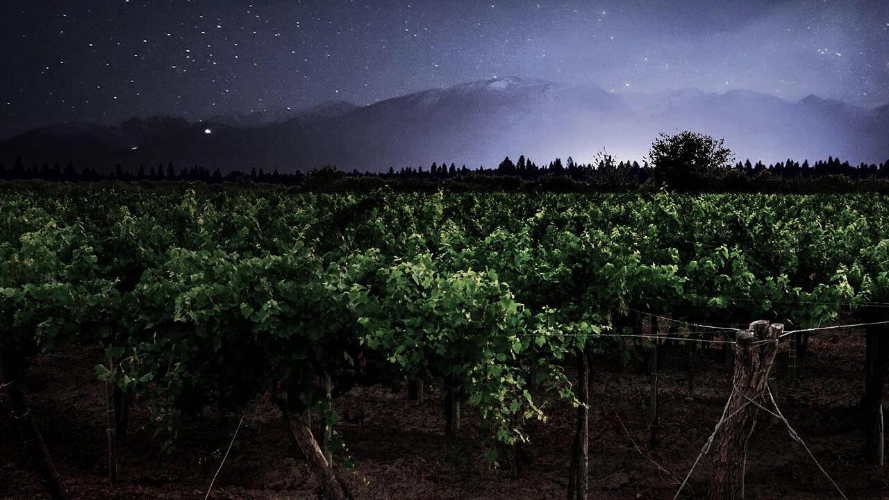 Somewhere Else Vineyards Cover Image