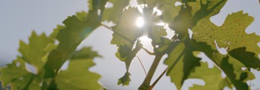 Sodaro Estate Winery Image