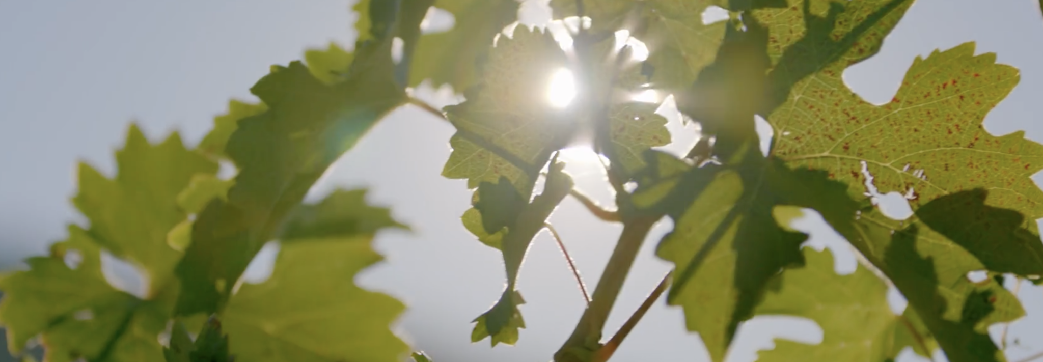 Sodaro Estate Winery Cover Image