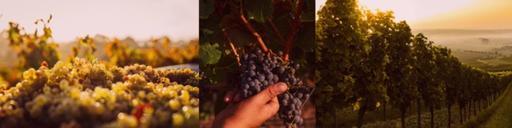 Vinos Unidos Wine Image