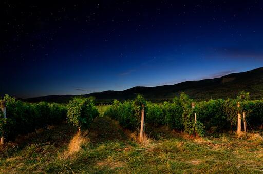 Big Sipper Wine Image