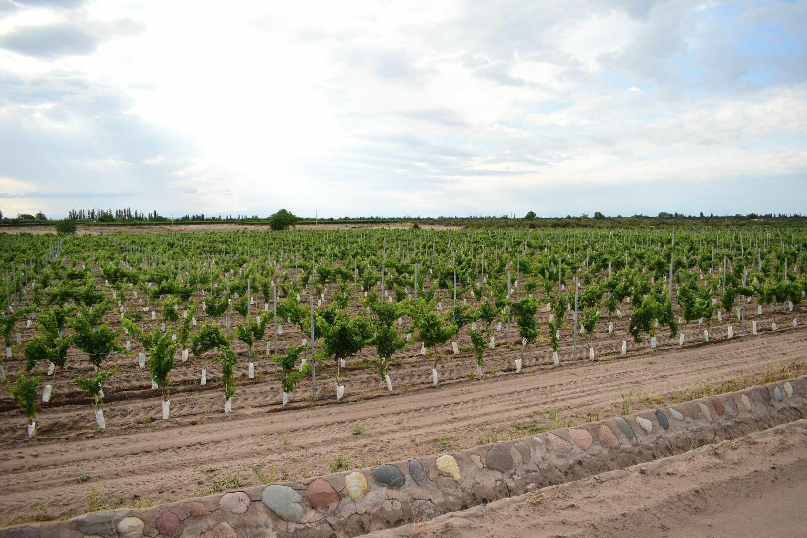 Tittarelli Wines Cover Image