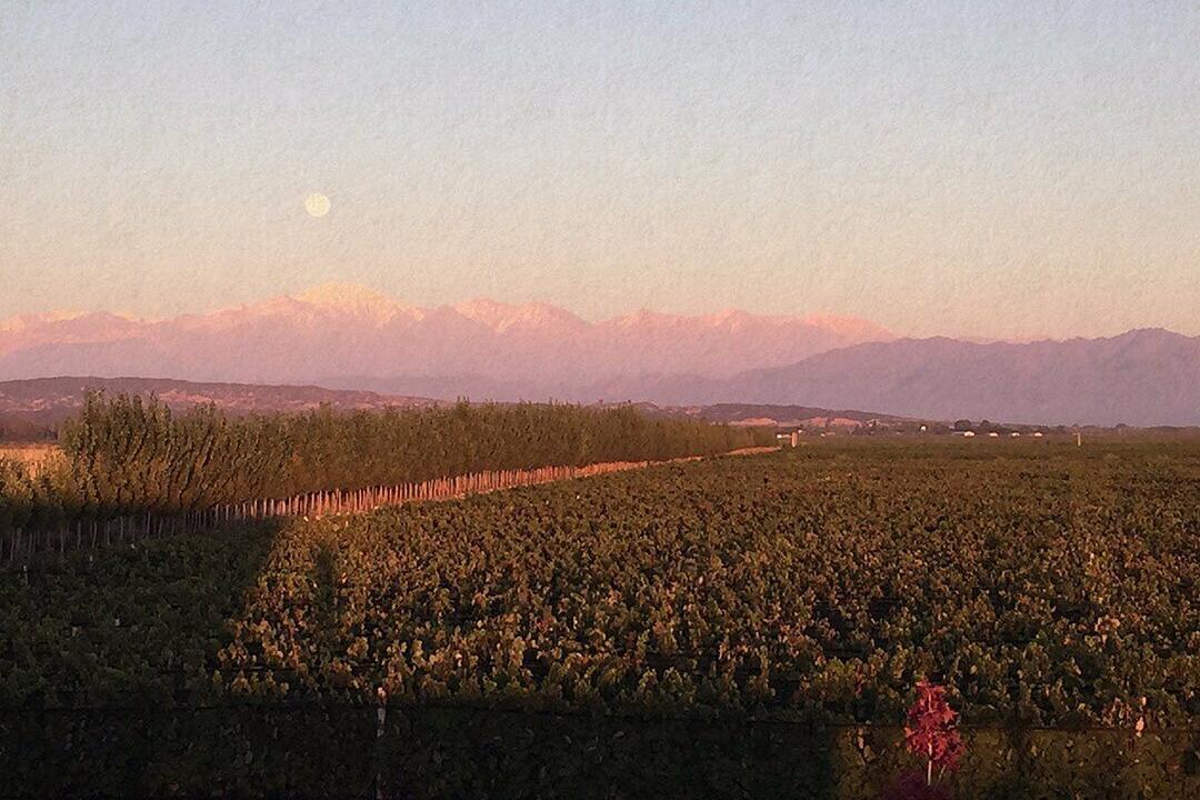 Abito Wines Cover Image