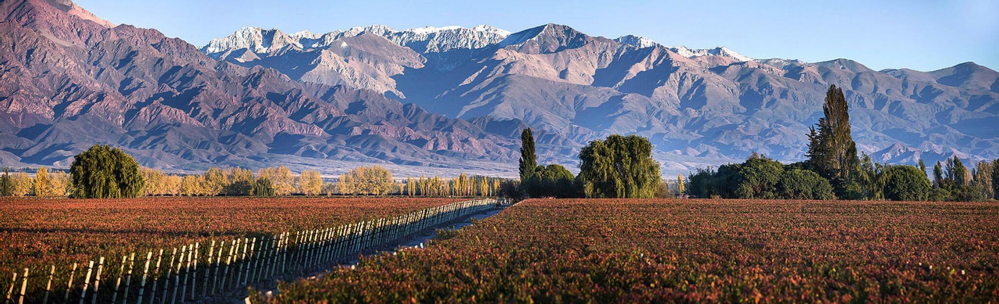 La Igriega Wines Cover Image