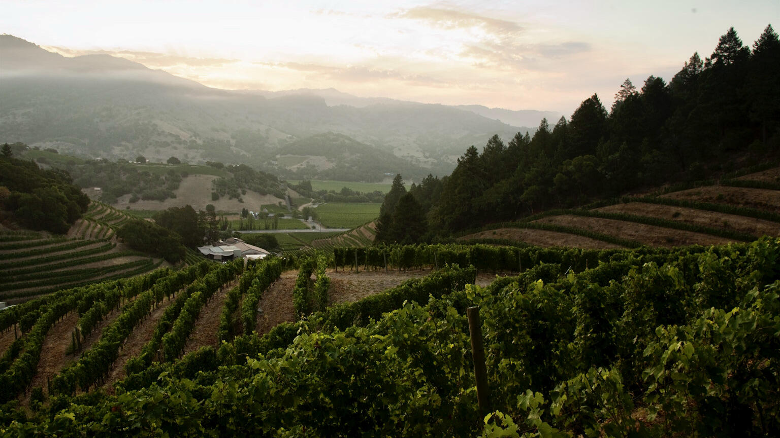 Pine Ridge Vineyards Cover Image
