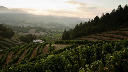 Pine Ridge Vineyards Image