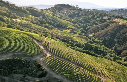 Geodesy Wine Image