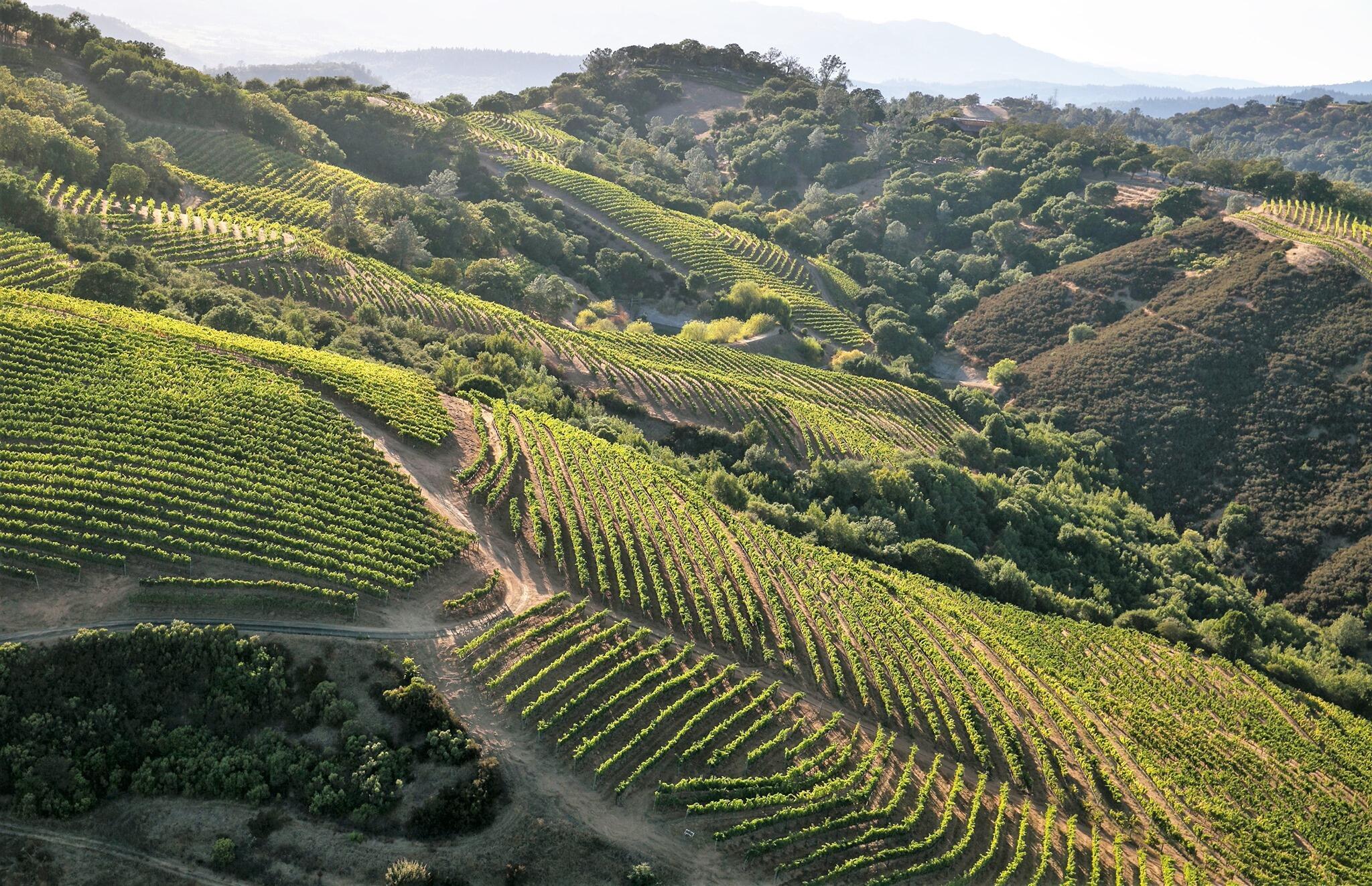Geodesy Wine Cover Image