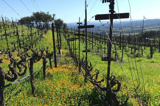 Hossfeld Vineyards Image
