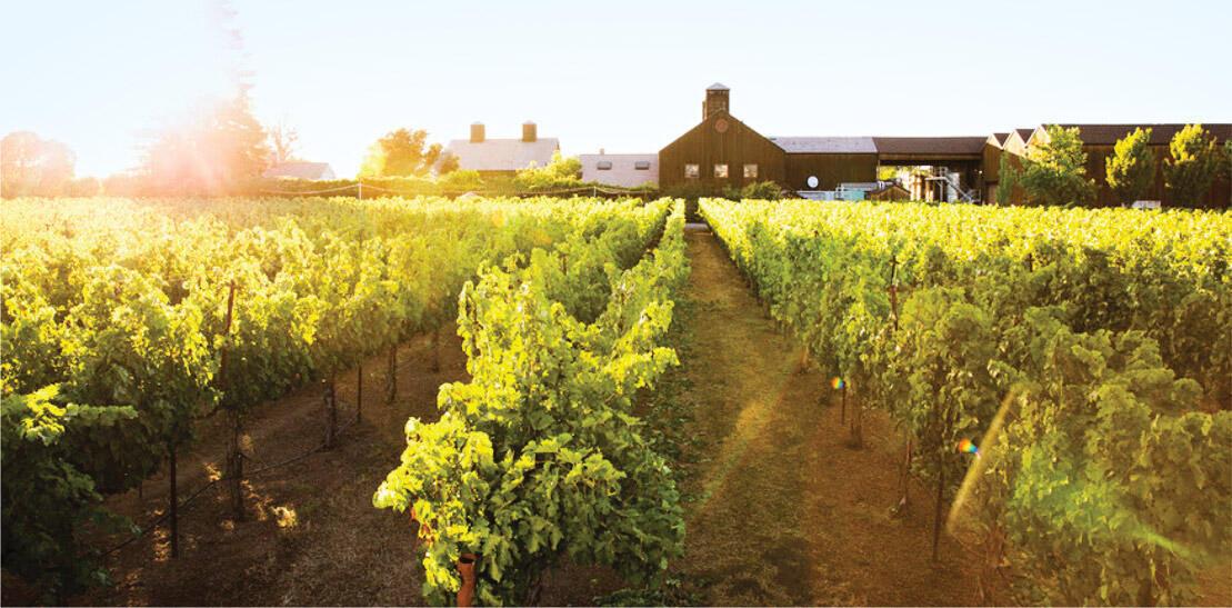 Turnbull Wine Cellars Cover Image