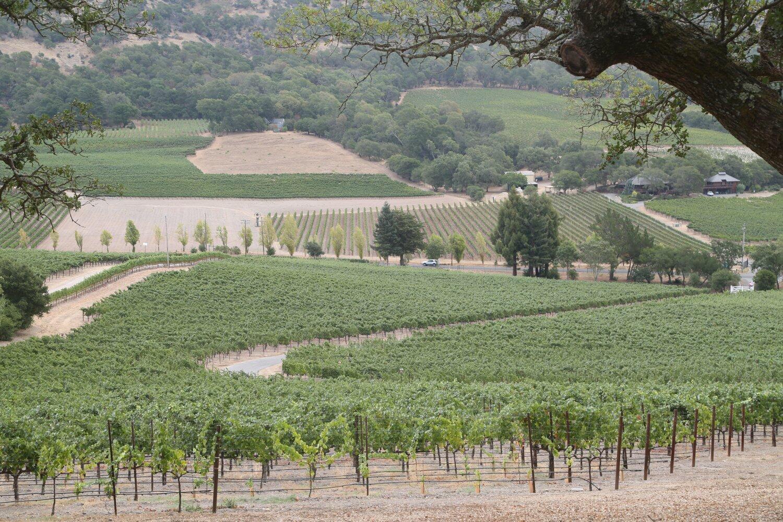 Rewa Vineyards Cover Image
