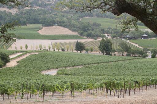 Rewa Vineyards Image
