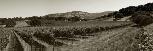 Gargiulo Vineyards Image