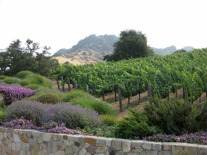 Cavus Vineyards Cover Image