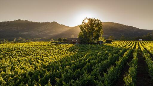 Seven Apart Wines Image