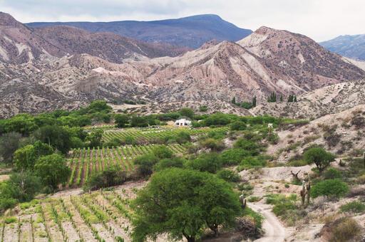Finca Gualfín Image