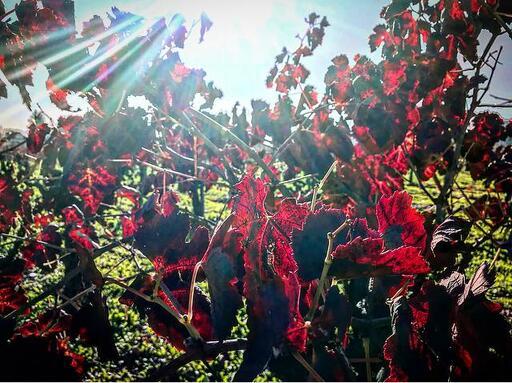 David Fulton Winery Image