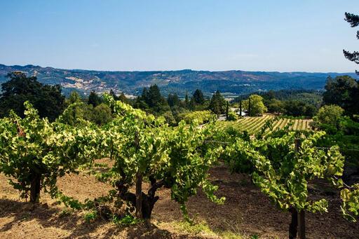 Stony Hill Vineyard Image